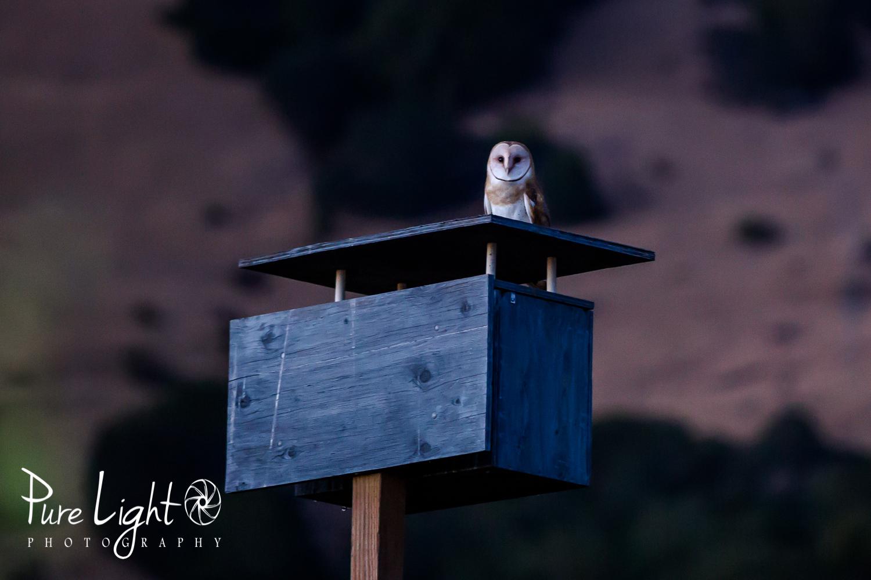 Owl6_10_15-1
